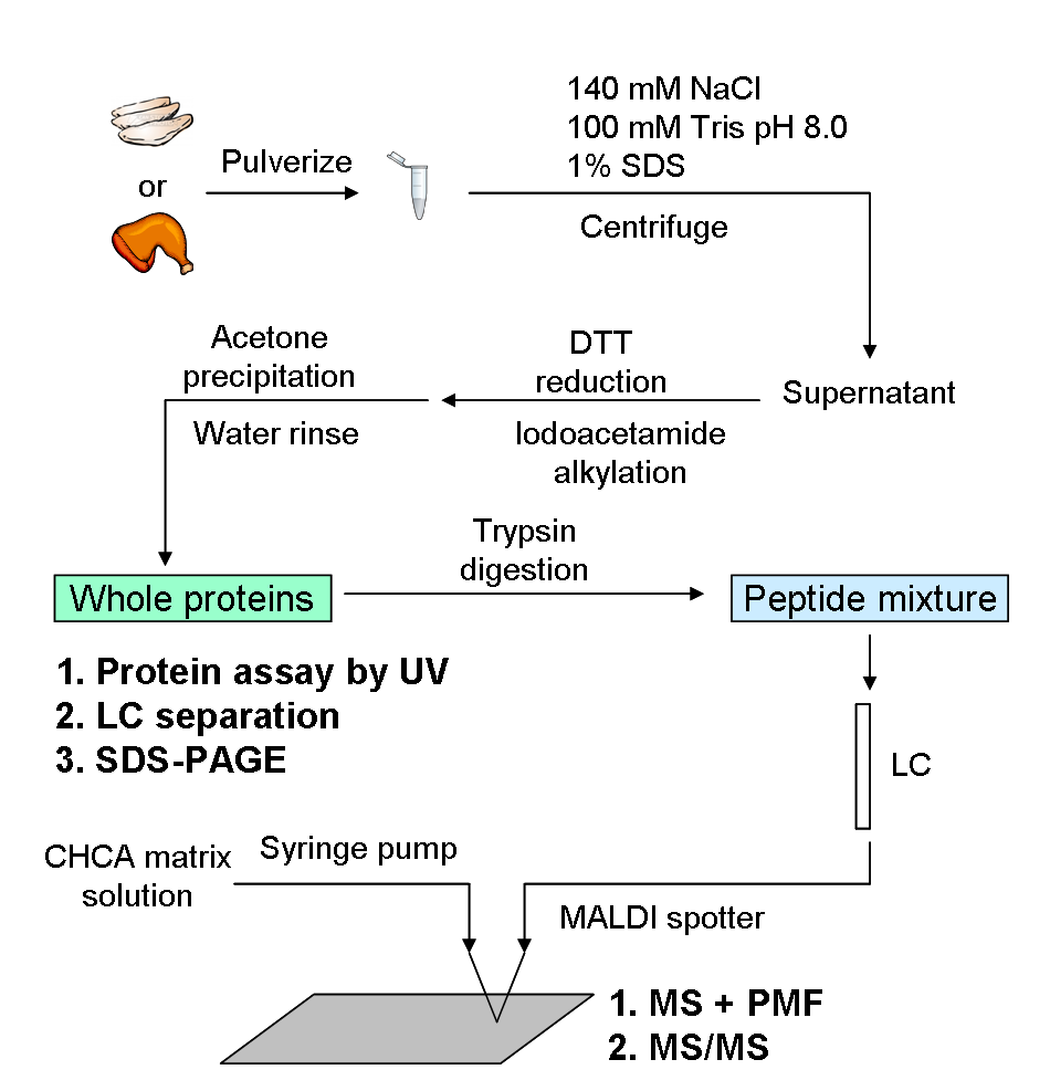 Biomarker Id And Analysis Simultof Systems Chicken Meat Diagram Symbol White Vs Dark By Lc Maldi With Ms Msasms 2011